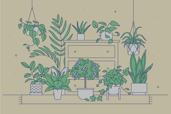 An array of plants