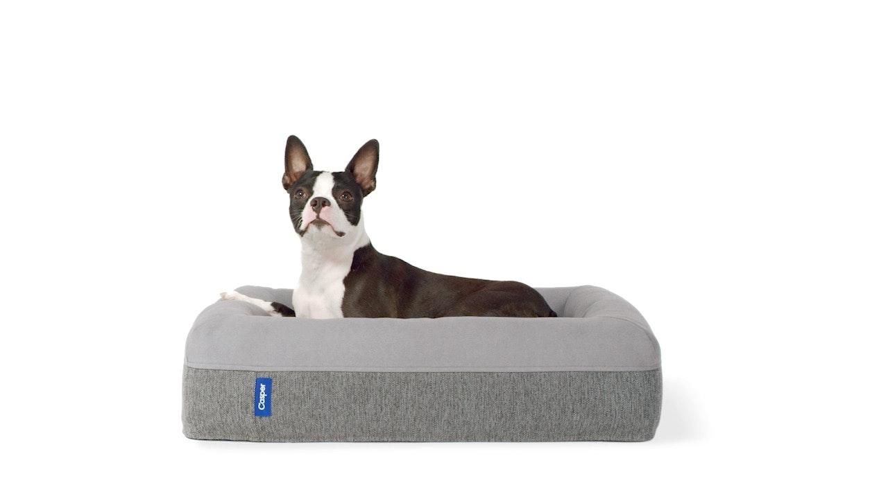 Memory Foam Dog Beds For Large Medium Small Dogs Casper