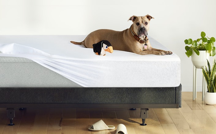 Dog sitting on mattress protector covering original mattress on foundation