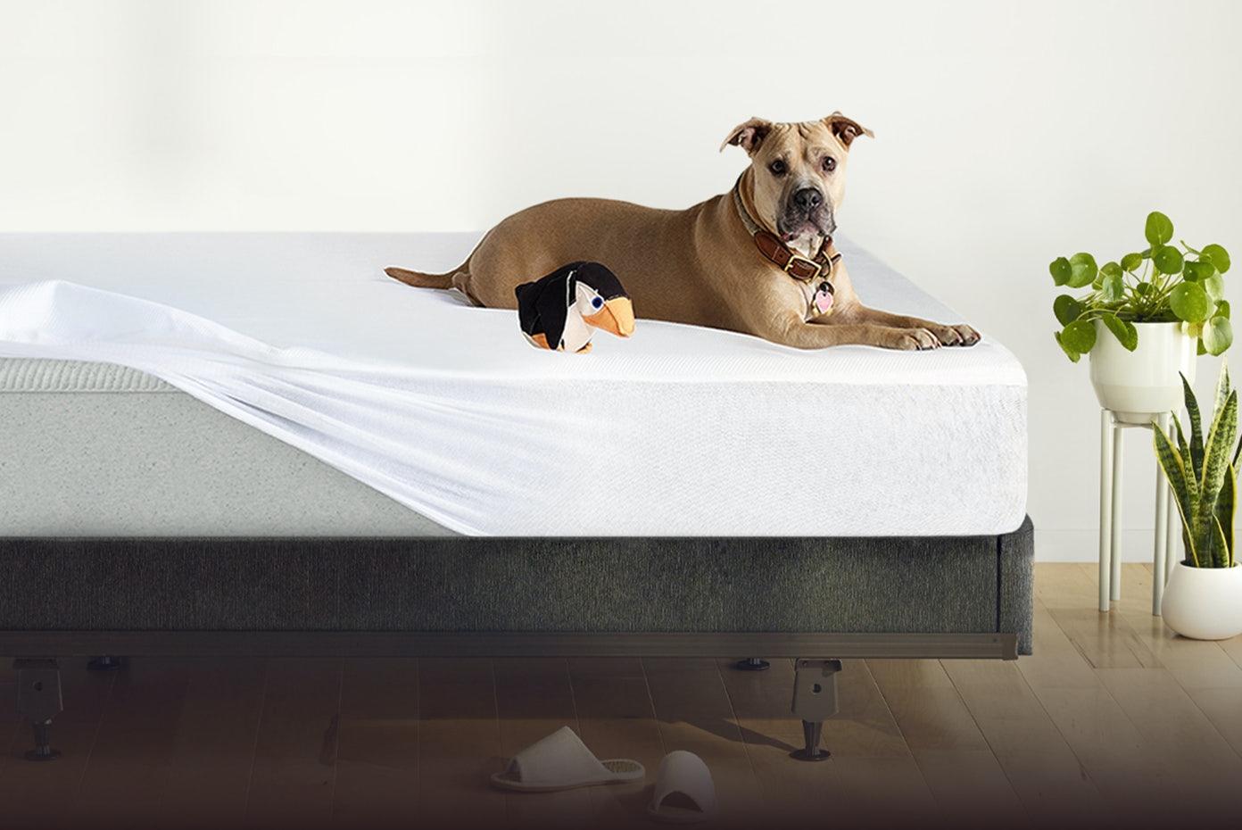 Dog laying on mattress protector on Casper Original Mattress and foundation
